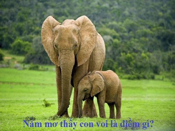 Mơ thấy con voi điềm báo điều gì