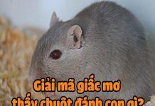 Giải mã ý nghĩa giấc mơ thấy chuột và con số may mắn tương ứng