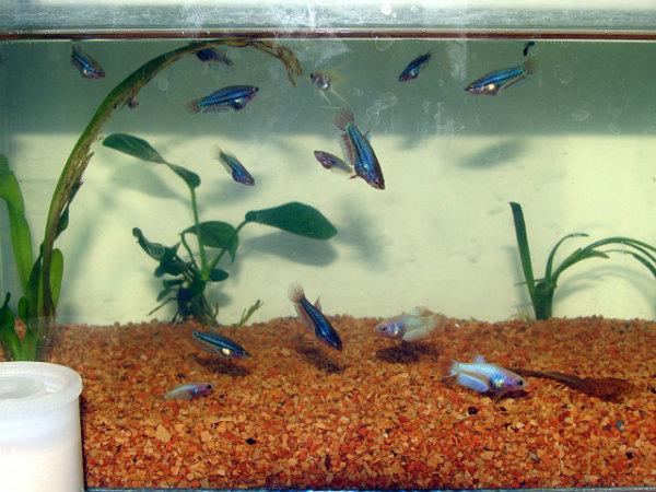 Chiêm bao thấy con cá con có ý nghĩa gì đặc biệt?