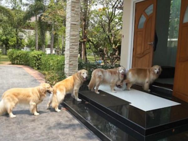 Nằm mộng thấy chó đến nhà có nhiều ý nghĩa đặc biệt