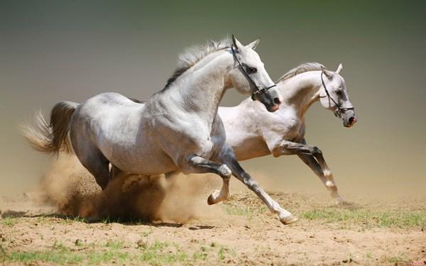 Giải mã giấc mơ thấy ngựa muốn nói điều gì