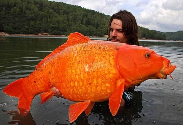 Nằm mơ thấy cá chép đánh con gì? đánh số nào?