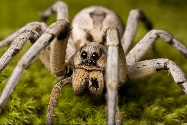 Đi tìm ý nghĩa giấc mơ thấy con nhện là điềm báo gì?