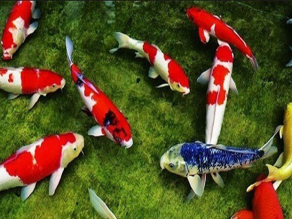 Nằm mơ thấy cá đánh con gì, là điềm lành hay dữ?