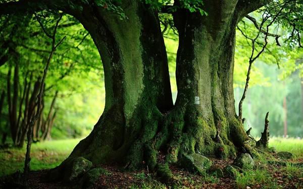 Giải mã giấc mơ thấy cây cổ thụ là điềm báo gì