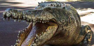 Nằm mơ thấy cá sấu đánh con gì ăn chắc, có điềm báo gì
