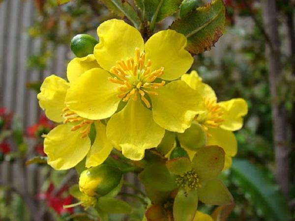 Mơ thấy hoa màu vàng điềm báo điều gì?