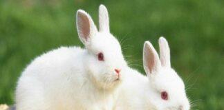 nằm mơ thấy con thỏ