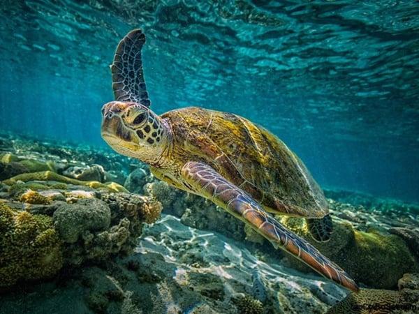 Mơ thấy con rùa đánh con gì?