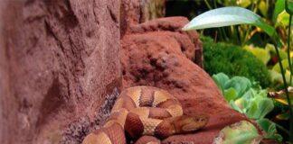 Nằm mơ thấy rắn đuổi đánh con gì ? Là điềm tốt hay xấu?